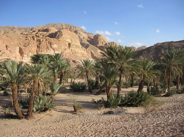 Fint med de gröna palmerna och bergen i bakgrunden. I den här riktningen ligger början på White Canyon.