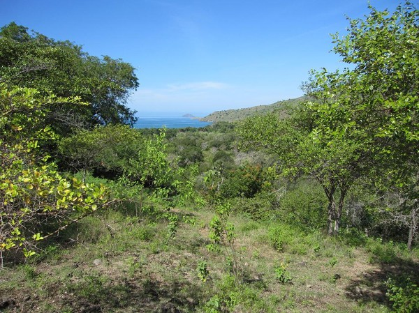 Bättre trekking än så här blir det inte. Helt enkelt fantastisk natur, Komodo island.