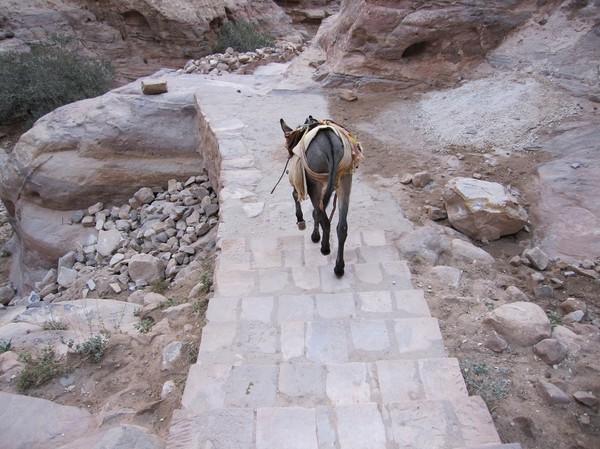 Den här åsnan hade jag sällskap av större delen längs vägen ner från Ad-Deir (Monastery), Petra.