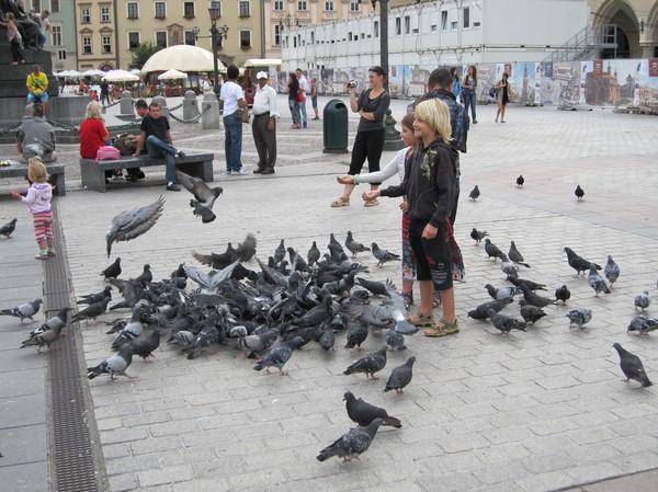 Barn matar fåglarna, gamla staden, Krakow.