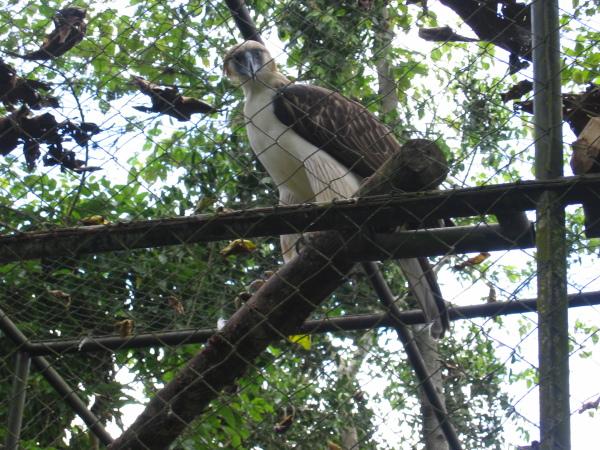 Philippine Eagle Conservation Center, utanför Davao, Mindanao.