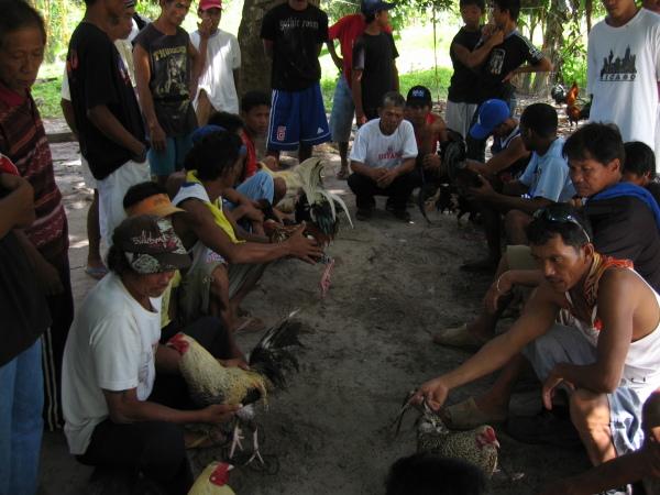 Dags för tuppfäktning, Port Barton, Palawan.