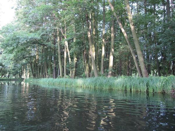 Naturen längs kanalen första dagen var sådär, Spreewald.