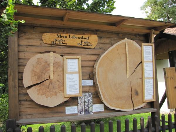 Närmare 200 år gamla träd, Lübbenau, Spreewald.