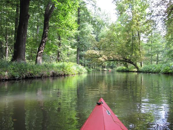 Djup skog, Spreewald.