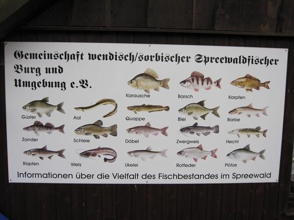 Fiskarter i Spreewald området.