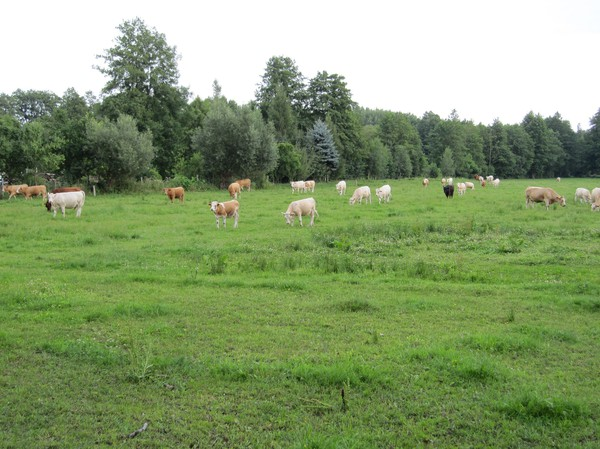 Kvällspromenad, vid andra campingplatsen, Spreewald.