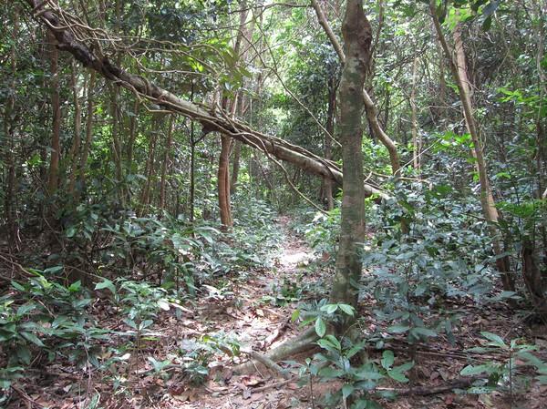 Regnskog längs leden till Ong Dung beach.
