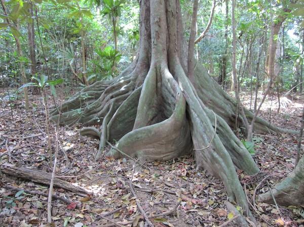 Regnskog längs leden till Ong Dung beach. Jag har trekkat en del i djungel och sett en del. Denna djungel var oväntat fin måste jag säga.