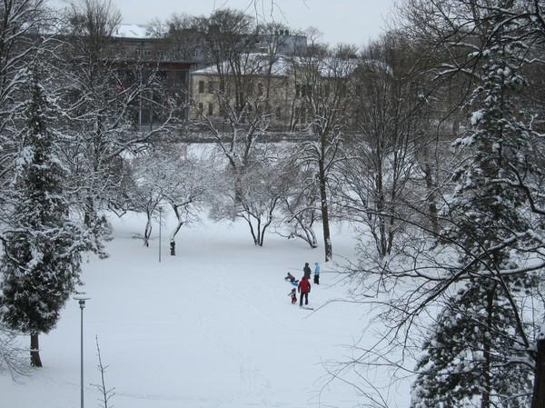 Pulkväder i Hirvepark, centrala Tallinn.