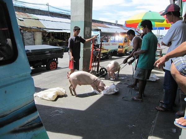 Grisförsäljning på marknaden i Ormoc, Leyte.