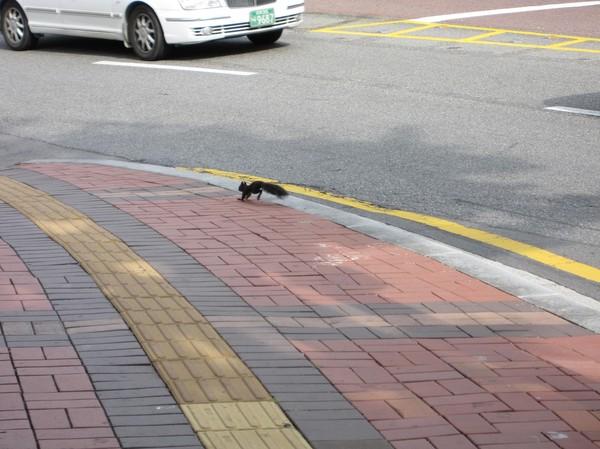Den här lilla krabaten blev nästan överkörd i centrala Seoul!