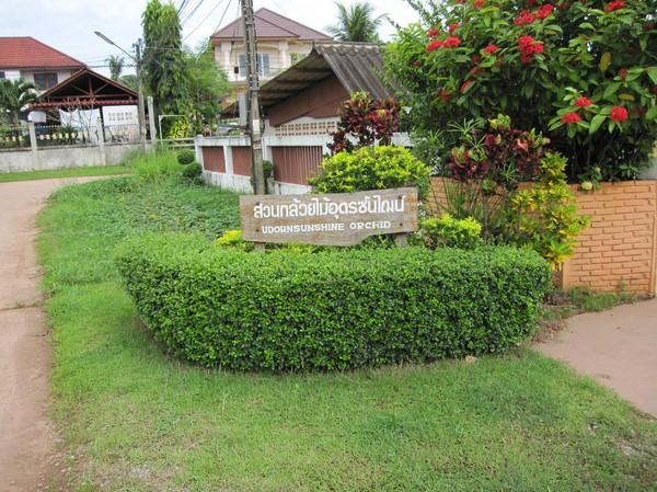 Entrén till Udorn Sunshine Nursery, där den dansande plantan finns.