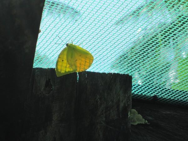 Butterfly Garden, Siquijor.