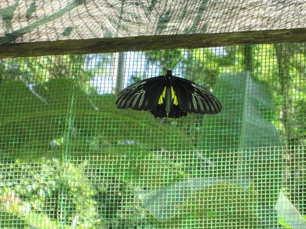 Butterfly Garden, Siquijor.