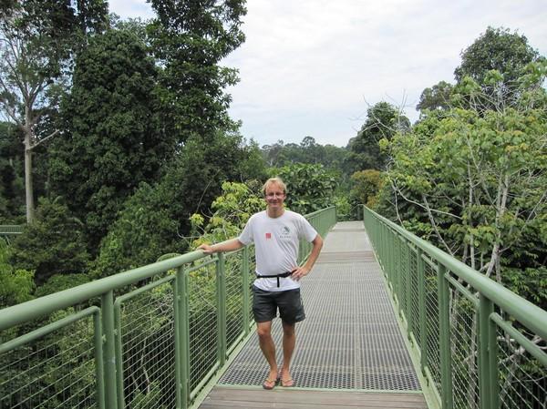 Mellan utfodringarna vandrade vi i djungeln och då ingick även lite canopy walk. Mycket intressant att komma upp lite i luften. På en del ställen är man 26-27 meter ovanför marken.