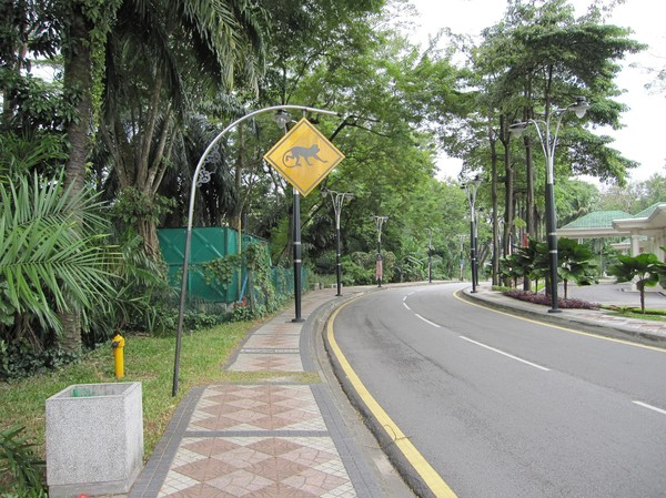 Varning för apor på vägen utanför Bird Park.