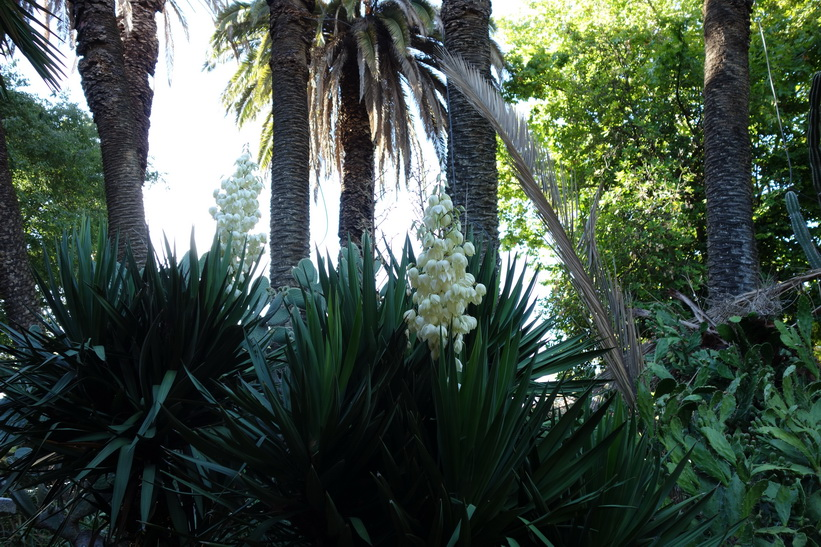 Jardim da Estrela, Lissabon.
