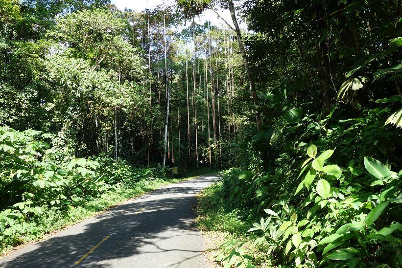 Vägen mellan Bocas Town och Boca del Drago, Isla Colon.