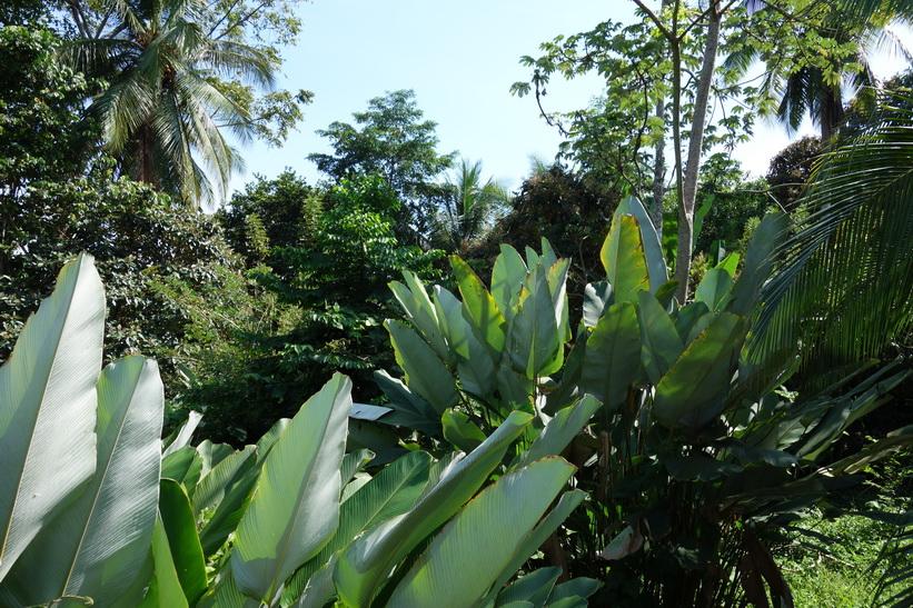 Naturen runt Cabinas Esmo, Uvita.