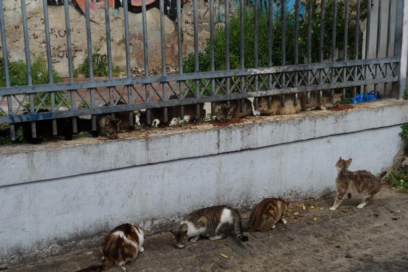 Utfodring av vildkatter någonstans längs den grandiosa promenaden i centrala Aten.