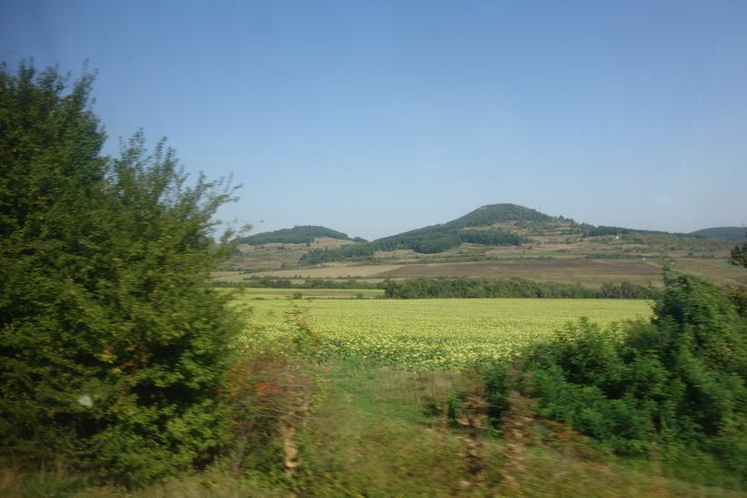 Fält med solrosor någonstans mellan Veliko Tărnovo och Sofia.