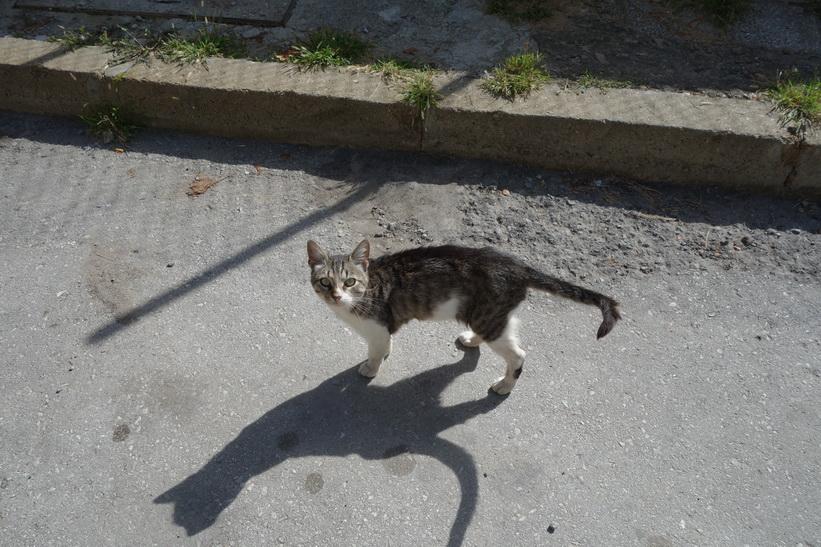 Katter finns det massor av i Veliko Tărnovo.