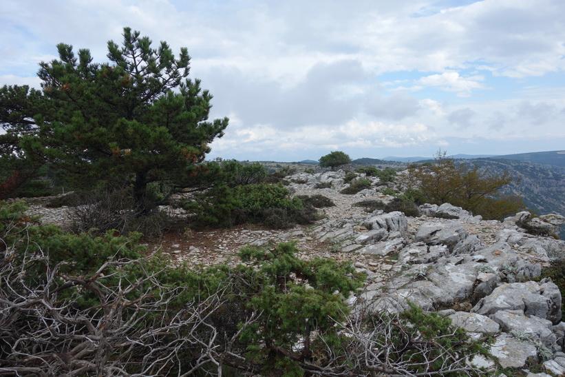 Leden nära toppen av Vidova Gora.
