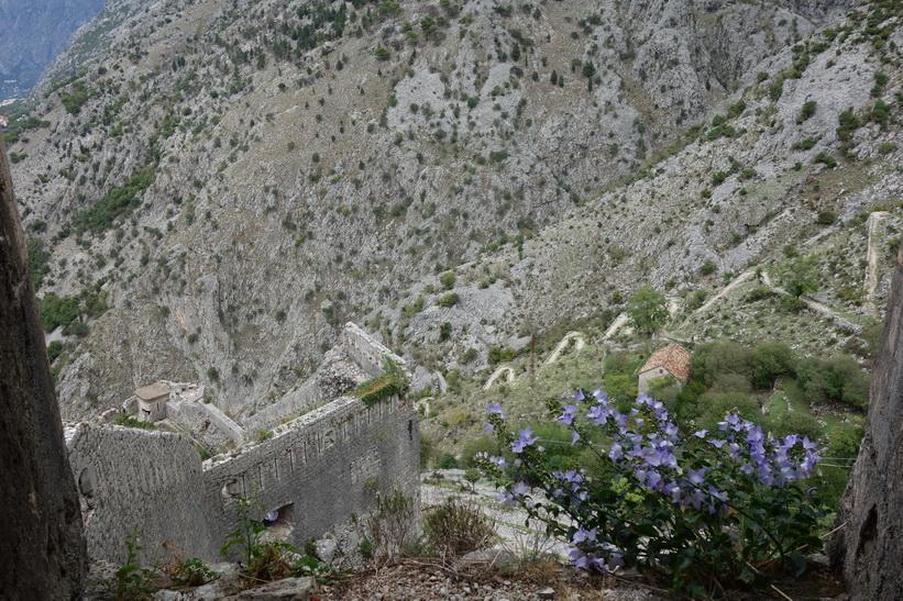 Fina blommor uppe på St John's mountain, Kotor.