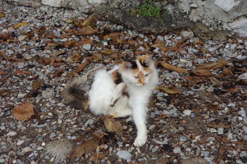 Katt på stranden i Lake Ohrid.