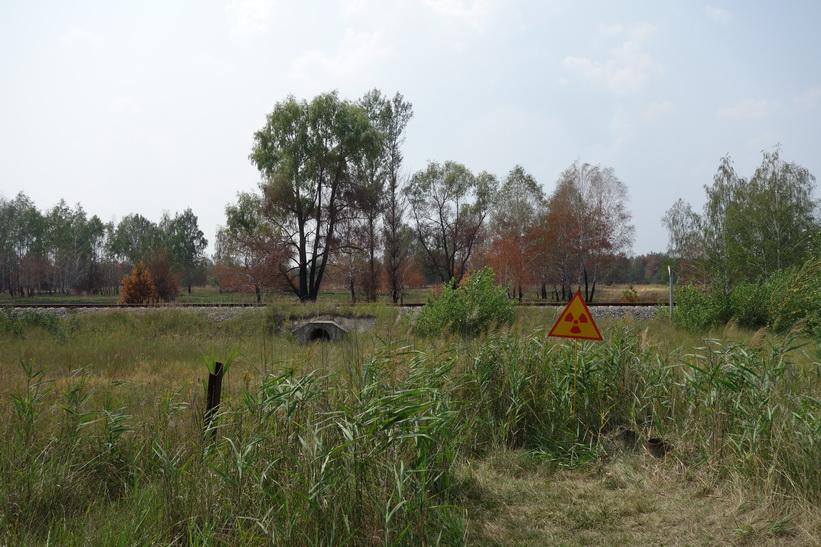 I området kring Pripyats stadsskylt finns det många skyltar som varnar för strålning. The Red Forest ligger också här. I bakgrunden kan en del av denna skog ses.