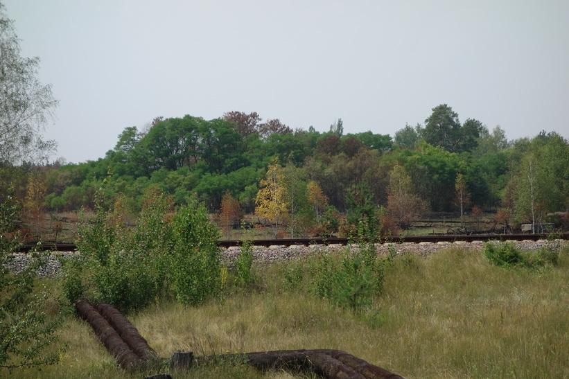 En del av The Red Forest i bakgrunden vid Pripyats stadsgräns.