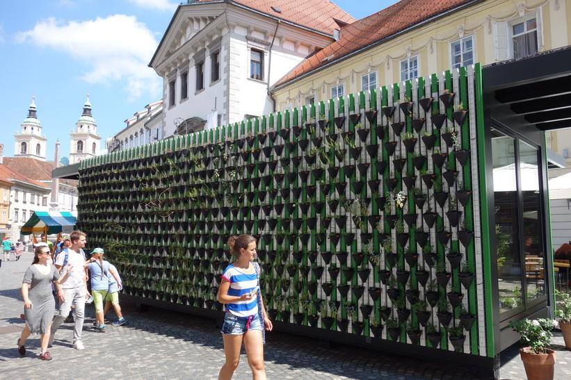 Växtuställning med Ljubljanas stadshus i bakgrunden.