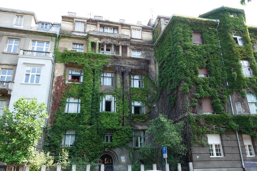 Häftig växtlighet på fasaden, Zagreb.