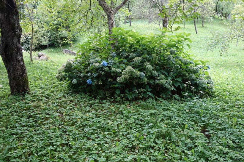 Fina växter i trädgården, Radovlica.