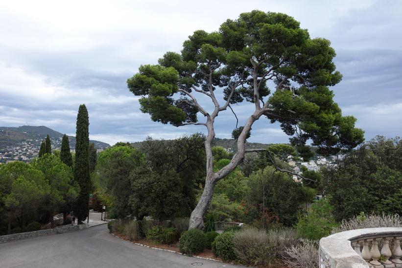 Parc de la Colline du Château, Castle Hill, Nice.