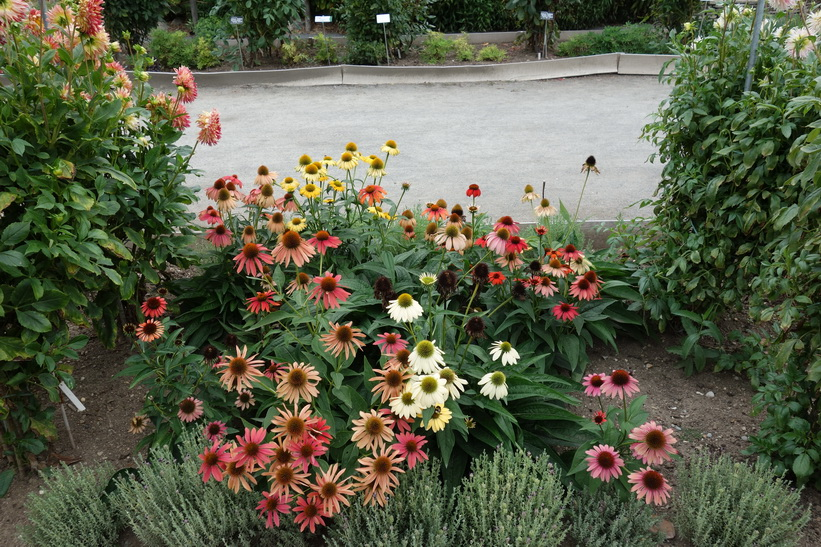 Lyon Botanical Garden, Lyon.