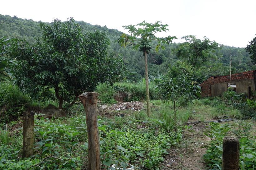 Längs vägen upp till Son Tra Mountain (Monkey Mountain), Da Nang.