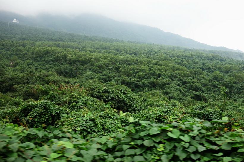Bach Ma National Park från tågfönstret mellan Da Nang och Hue.