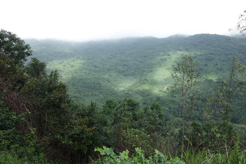 Djungel längs vägen upp till Son Tra Mountain (Monkey Mountain), Da Nang.